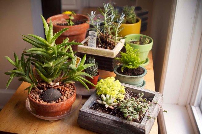 SucculentWindowGarden