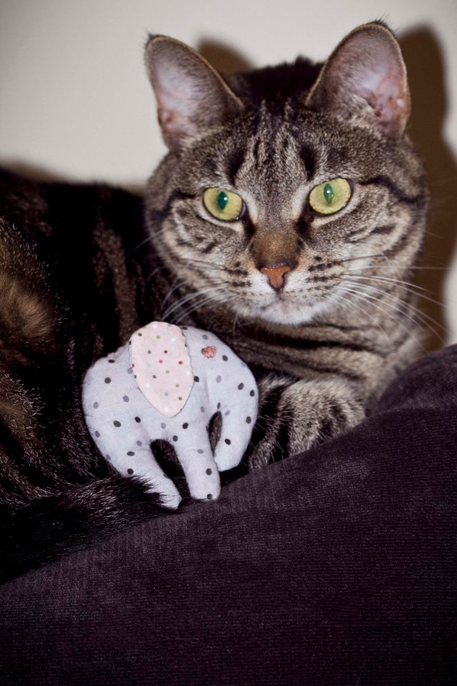 Elephant Cat Toy